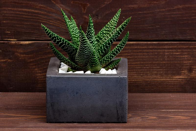 Квадратный горшок для высадки кактусов